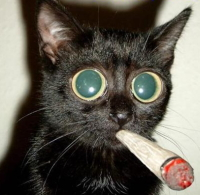 IMAGE(http://stuffstonerslike.files.wordpress.com/2009/03/23563_cat_smoking.jpg)